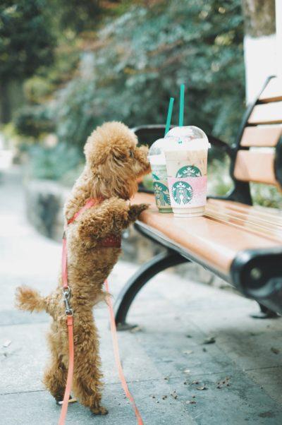 スターバックスコーヒ,お得,利用,無料